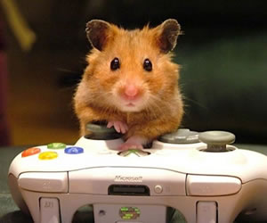 Hamsters hamstering